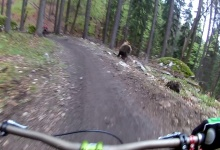 Bear Charges Mountain Biker